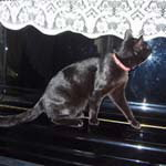 当社では買い取ったピアノは全て自社にて当社スタッフの手でクリーニング・修理・調整いたします。